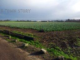 Daffodil Pickers, Hoo St. Werburgh, 29th December 2015