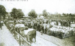 Cattle Market, Sittingbourne, 1905
